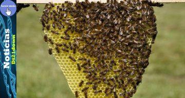 Hombre con Síndrome de Down murió tras sufrir múltiples picadas de abeja en Cali